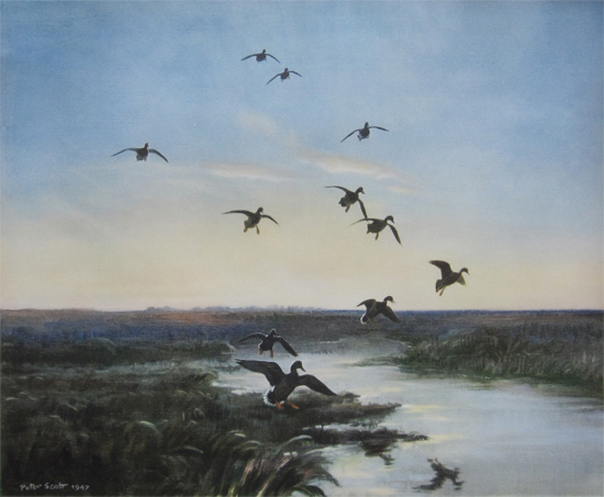 Sir Peter Markham Scott: Mallards Arriving at Dusk
