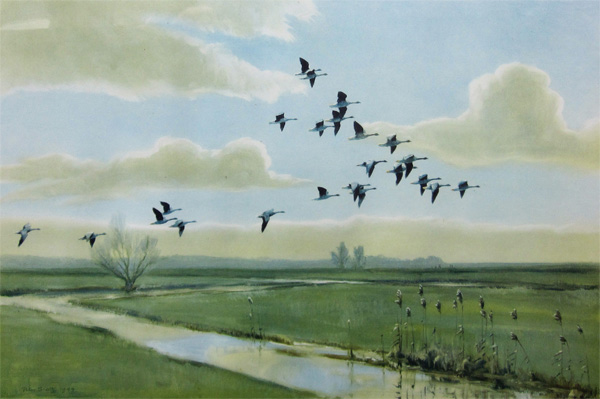 Sir Peter Markham Scott: Pink Feet - the Wild Geese of England