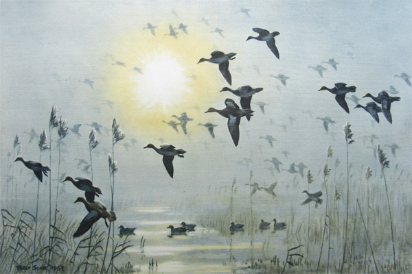 Sir Peter Markham Scott: Wigeon on a Misty Morning