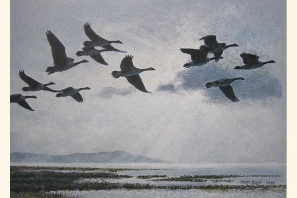 Canada Geese in a Silver Sky